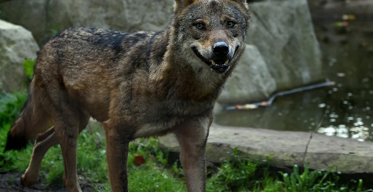 Lamuse rendez vous sauvages parc zoologique de paris for Parc sauvage 78