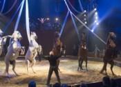 Les cirques à l'affiche