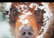 Espèces d'ours !