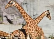 Un week-end au Zoo de Paris